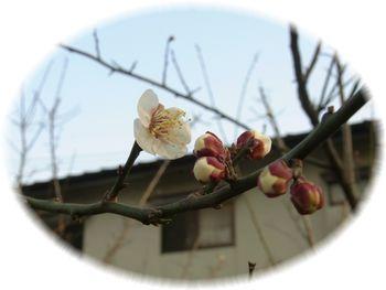 春の足音-2.jpg