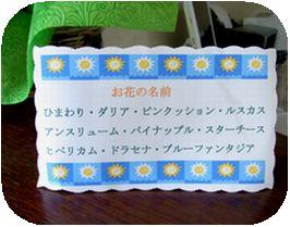 ブログ用花の名前.jpg