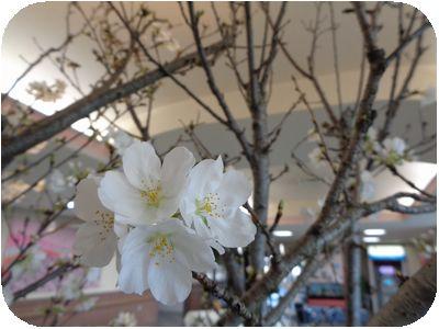 お花見喫茶2.jpg